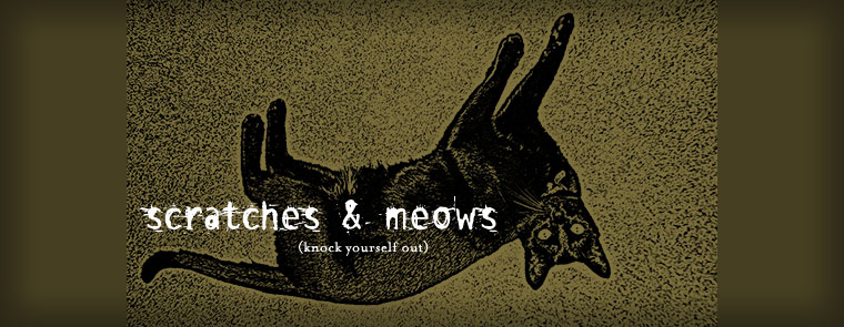 scratches & meows
