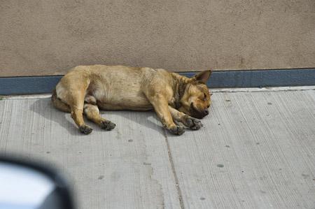 kayenta dog